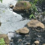 PENCEMARAN LINGKUNGAN SEMARANG : OPSI Siap Adukan Limbah Sungai Klampok ke BLH