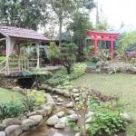 WISATA SOLO : Investor Tertarik Bikin Museum Kupu-Kupu di Taman Balekambang