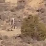 KISAH MISTERI : Makhluk Misterius Diduga Chupacabra Tertangkap Kamera