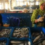 HARGA IKAN PACITAN : Cuaca Buruk, Harga Ikan di Pacitan Setiap Hari Naik