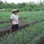 PERTANIAN GUNUNGKIDUL : Musim Hujan Datang Lebih Awal, Petani Kesulitan Peroleh Benih