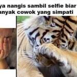 TRENDING SOSMED : Lucu! Harimau Ini Tirukan Gaya Selfie Perempuan