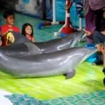Koalisi Peduli Satwa Minta Pentas Lumba-lumba di Alkid Solo Dibatalkan