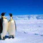 24 Negara dan Uni Eropa Bangun Taman Laut Terbesar di Antartika