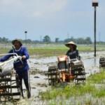 Ilustrasi petani mengolah tanah sebelum menanam padi. (JIBI/Solopos/Antara/Yusuf Nugroho)