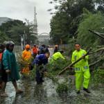 Pohon Asem Depan RSUP dr Sardjito Tumbang