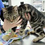 KISAH TRAGIS : Dikurung Tanpa Makanan Satu Tahun, 14 Kucing Jadi Kanibal