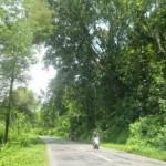 BENCANA WONOGIRI : Hantu Gunung Pegat Itu Berwujud Pepohonan
