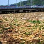 FOTO BANJIR GROBOGAN : Padatnya Sampah Sungai Serang…