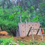 Selamatkan Satwa Langka, Pemkab Ponorogo Didesak Bangun Penangkaran Burung Merak