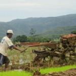 PERTANIAN BANTUL : Cegah Gagal Panen, Setiap Desa Diberi Pedoman Tanam
