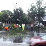 ANGIN KENCANG KARANGANYAR : Lisus Tumbangkan Pohon di Jl. Adisucipto Colomadu
