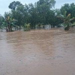 BANJIR BOYOLALI : Terendam Air, 5 Hektare Tanaman Padi Andong Gagal Panen