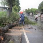 ANGIN KENCANG KARANGANYAR : Lisus Robohkan Baliho dan Pohon di Jl. Adisucipto Colomadu
