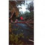 ANGIN KENCANG BOYOLALI : Hujan Angin Tumbangkan Pohon-Pohon di Wilayah Kota