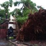 ANGIN KENCANG KARANGANYAR : Pohon Beringin Tua di Depan Rumdin Bupati Tumbang