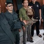 SATWA LANGKA : Warga 2 Cilacap Ditangkap Gara-Gara Jual Hewan Liar via Facebook