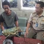 PENYELUNDUPAN HEWAN SEMARANG : Pengiriman Lobster Bertelur via Bandara Ahmad Yani Digagalkan