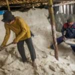 KNTI Duga Penyelewengan Impor PT Garam Libatkan Mafia di Kementerian