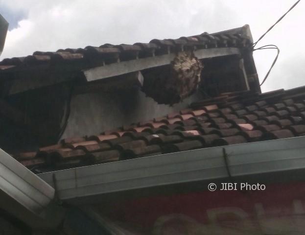Duh, Serangan Tawon Vespa di Sukoharjo Capai 450 Kasus
