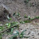 BENCANA PONOROGO : Hujan Deras, 2 Rumah di Ngrayun Rusak Diterjang Longsor