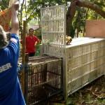 SATWA LIAR BOYOLALI : Perburuan Monyet Liar Tak Berhasil, Posko dan Jebakan Disiapkan