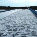 Mulai Serius, Pemerintah Kumpulkan Lahan Garam di NTT