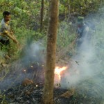 KEBAKARAN PONOROGO : Hutan Poko Terbakar 3,5 Hektare Diduga Akibat Puntung Rokok
