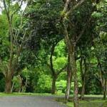 Tutupan Hutan di DIY Jauh dari Ideal
