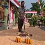 PERTANIAN KLATEN : Harga Jagung Rp4.000/Kg, Petani Tulung Untung