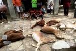 PETERNAKAN GUNUNGKIDUL : Akhirnya, Ada Warga yang Melihat Wujud Hewan Penyerang Ternak