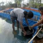 PERIKANAN KUDUS : Pemkab Kudus Genjot Pembibitan Ikan Nila