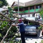 Mobil Tertimpa Pohon Besar di Depan SMPN 6 Boyolali