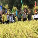 Semula Rawan Pangan, 8 Desa di DIY Ini Jadi Lumbung Pangan