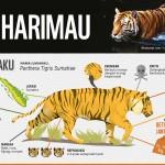 KEANEKARAGAMAN HAYATI : Melindungi Spesies Harimau Terakhir di Indonesia
