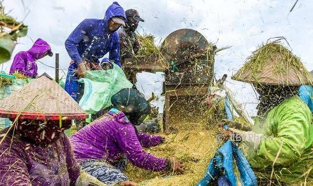 PERTANIAN JATENG : Petani Berlahan 0,5 Ha ke Bawah Dominan, Pemprov Akui Petani Jateng Miskin
