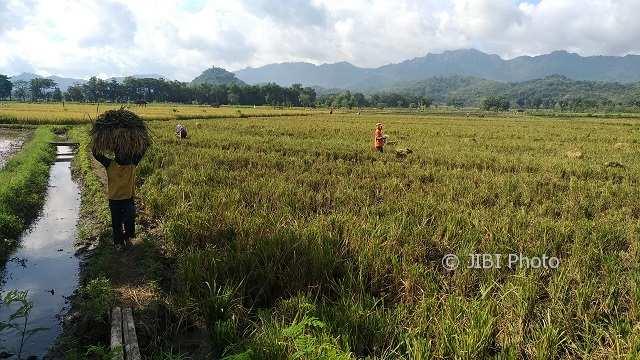 PERTANIAN WONOGIRI : Petani Ogah Tanam Hortikultura Meski Menguntungkan, Ini Alasannya