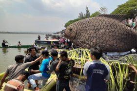 Tumpeng Ikan 200 Kg Dilarung ke Waduk Bening Widas Sebagai Bentuk Rasa Syukur