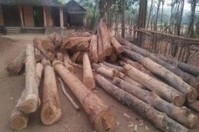 Pria Ponorogo Terciduk Curi 100 Pohon Jati dan Akasia di Hutan