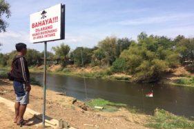 Tak Hanya Etanol, Bengawan Solo Juga Tercemar Limbah Ternak