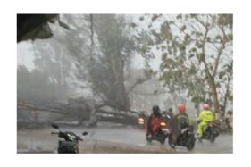 Arus lalu lintas di Jalan Solo-Purwodadi Gemolong, Sragen, macet akibat pohon tumbang melintang jalan, Sabtu (12/10/2019). (Istimewa)
