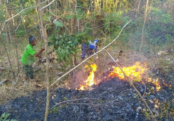 8 Hektare Hutan di Batuwarno Wonogiri Terbakar