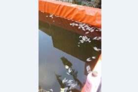 Bibit ikan nila milik Daniel Adi Susanto warga Banyunyar, Banjarsari, Solo, mati di kolam, Selasa (22/10/2019) pagi. (Solopos-Mariyana Ricky P.D.)