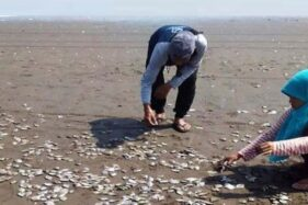 Warga memunguti ikan yang ditemukan mati di Pantai Cemoro Sewu atau Pantai Jetis, Kecamatan Nusawungu, Kabupaten Cilacap, Jawa Tengah, Sabtu (12/10/2019). (Facebook.com-Paijo Kbm)