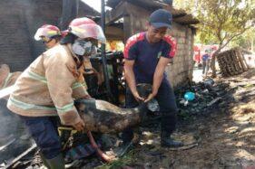 Kebakaran Sukoharjo: Kandang Dilalap Api, 4 Kambing Mati Terpanggang