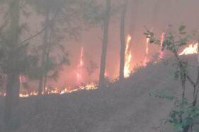 Omnibus Law RUU Cilaka, Pasal Sakti Penjerat Pembakar Hutan Dihapus