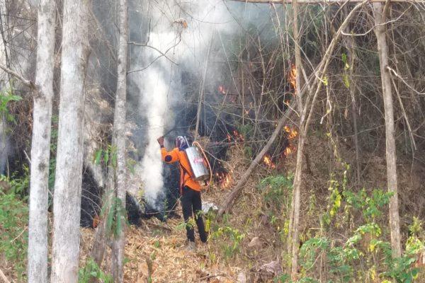 Hutan Negara di Gunung Pegat Wonogiri Terbakar
