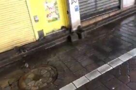 Video Viral Tikus Serbu Tokyo Usai Topan Hagibis, Bikin Geli