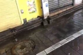 Sejumlah tikus berkeliaran di kawasan Shibuya, Tokyo, Jepang, setelah Topan Hagibis melanda, Sabtu (12/10/2019)