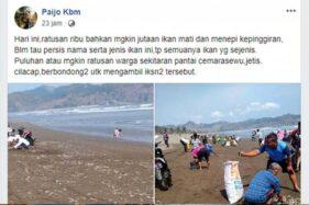 Unggahan pengguna Facebook, Paijo Kbm, terkait dengan ribuan ikan yang ditemukan mati di Pantai Cemoro Sewu atau Pantai Jetis, Kecamatan Nusawungu, Kabupaten Cilacap, Jawa Tengah. (Antara-Facebook-Paijo Kbm)